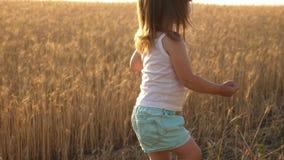 A criança pequena está jogando a grão em um saco em um campo de trigo Cultivando o conceito Criança com trigo à disposição O bebê vídeos de arquivo