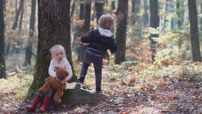Criança pequena feliz, bebê que ri e que joga no outono na caminhada da natureza fora vídeos de arquivo