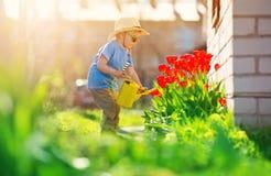 Criança pequena que anda perto das tulipas na cama de flor no dia de mola bonito imagem de stock