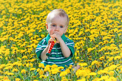 Criança pequena que senta-se no dente-de-leão Imagens de Stock