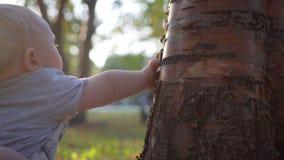 A criança pequena toca na árvore Close-up Casca e tentativas dos rasgos para comê-lo vídeos de arquivo