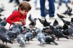 Criança que alimenta os pombos Fotografia de Stock