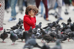 Criança que alimenta os pombos imagens de stock