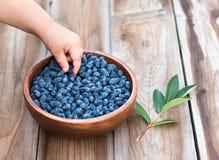 Criança que come bagas azuis Fotografia de Stock