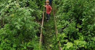 Criança que dá uma volta no jardim verde verde vídeos de arquivo