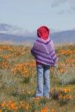 Criança que está no campo das papoilas Foto de Stock Royalty Free