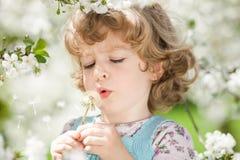 Criança que funde no dente-de-leão fotos de stock royalty free