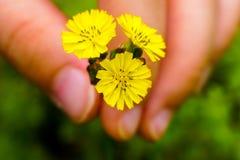 Criança que guarda Wildflowers amarelos imagem de stock