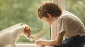 Criança que joga com seu amigo do cão na janela vídeos de arquivo