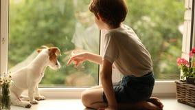 Criança que joga com seu amigo do cão na janela filme