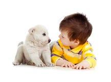 Criança que olha o filhote de cachorro no fundo branco fotografia de stock royalty free