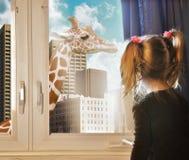 Criança que olha o sonho do girafa na janela Imagens de Stock