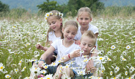 Crianças assentadas no prado entre margaridas Fotos de Stock
