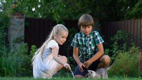 Crianças bonitos que jogam com gatinho pequeno fora, os melhores momentos da infância filme