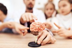 Crianças com o professor que olha um modelo do cérebro humano fotografia de stock royalty free
