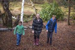 Crianças dos filhos da mãe e do menino que andam na floresta fotos de stock royalty free