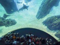 Crianças em uma excursão em um aquário imagens de stock royalty free