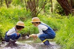 Crianças, jogando em pouco rio com patinhos Imagens de Stock