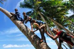 Crianças locais que escalam a palmeira para balançar em um balanço da corda em Lavena foto de stock