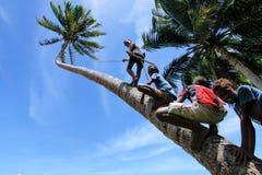 Crianças locais que escalam a palmeira para balançar em um balanço da corda em Lavena imagens de stock