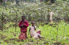 Crianças locais que trabalham nos campos da plantação do café e de banana Fotografia de Stock