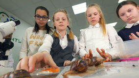 Crianças na sala de aula da biologia que aprendem caracóis, insetos de alimentação filme