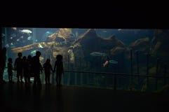 Crianças no aquário Foto de Stock Royalty Free