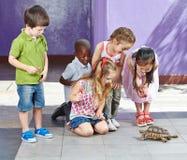 Crianças no jardim zoológico de trocas de carícias que olha Imagens de Stock