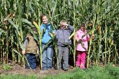 Crianças no milho Imagem de Stock