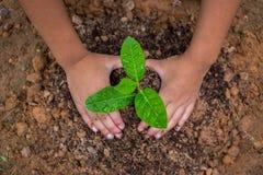 Crianças para amar a floresta Imagens de Stock Royalty Free