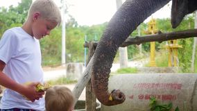 Crianças que alimentam as bananas do elefante vídeos de arquivo