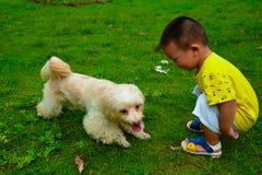 Crianças que alimentam o cão de Havanese Fotos de Stock