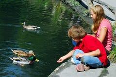 Crianças que alimentam patos imagens de stock royalty free