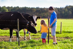 Crianças que alimentam a vaca em uma exploração agrícola Fotografia de Stock Royalty Free