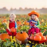 Crianças que escolhem abóboras no remendo da abóbora de Dia das Bruxas Imagem de Stock Royalty Free