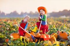 Crianças que escolhem abóboras no remendo da abóbora de Dia das Bruxas Fotos de Stock Royalty Free