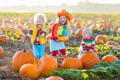 Crianças que escolhem abóboras no remendo da abóbora de Dia das Bruxas Fotografia de Stock Royalty Free