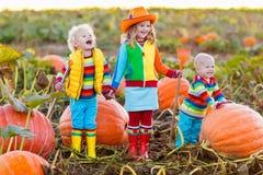 Crianças que escolhem abóboras no remendo da abóbora de Dia das Bruxas Imagens de Stock Royalty Free