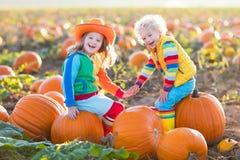 Crianças que escolhem abóboras no remendo da abóbora de Dia das Bruxas Foto de Stock