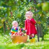 Crianças que escolhem maçãs em um jardim imagens de stock