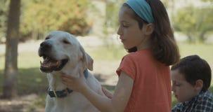 Crianças que jogam com um cão branco grande vídeos de arquivo