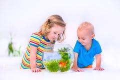 Crianças que olham a bacia dos peixes Imagens de Stock