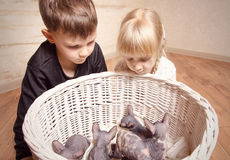 Crianças que olham a cesta de Sphynx em uma cesta Foto de Stock Royalty Free