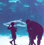 Crianças que olham tubarões Fotografia de Stock Royalty Free