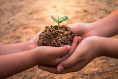 Crianças que plantam florestas para reduzir o aquecimento global fotografia de stock