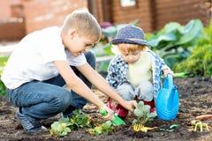 Crianças que plantam a plântula da morango no solo fértil fora no jardim Imagem de Stock