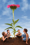 Crianças que plantam um Coneflower gigante Imagem de Stock
