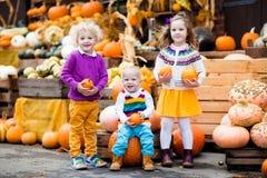 Crianças que têm o divertimento no remendo da abóbora Imagens de Stock Royalty Free