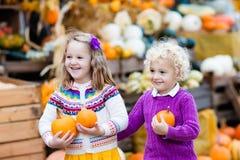 Crianças que têm o divertimento no remendo da abóbora Foto de Stock Royalty Free