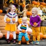 Crianças que têm o divertimento no remendo da abóbora Imagem de Stock